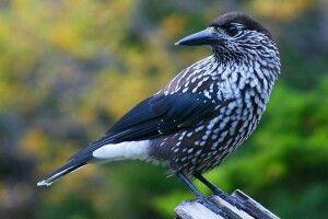 Погода на понеділок, 2 грудня: уважно приглядаймося до птахів