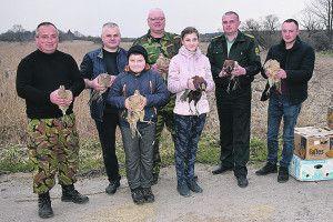 Лісівники випустили на волю 60 фазанів
