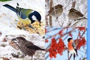 Волинян закликали під час снігопаду протягнути руку дружби пернато-дзьобатим