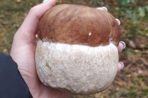 Сарненчанка показала знайдене у лісі грибище-квадратище (Фото)