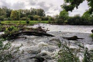 Лихо від дощів: на Волині Прип'ять може вийти з берегів і затопити пасовиська