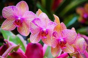 Хай квітнуть орхідеї!