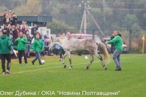 Один «і-го-го» і два «гав-гав» додали колориту футбольному матчу між збірними України та Італії (Фото)