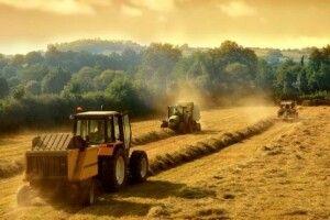 Фермерів стає більше