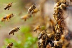 На Волині злодії поцупили… бджолині подушки