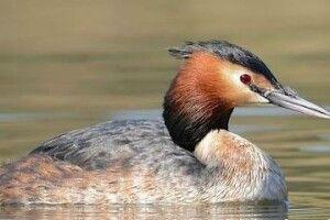 На Ратнівщині врятували птаха, який заплутався у браконьєрській сітці (відео)