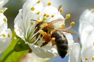 На Волині родина бджолярів знайшла новий заробіток