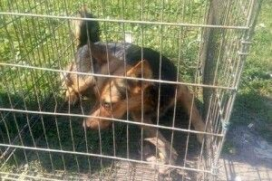 Лучанин встановлює капкани на безпритульних псів (фото)