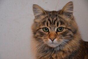 Котячі боги врятували волинського кота Пантелеймона: тепер йому шукають люблячих господарів (Фото)