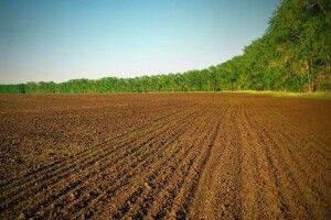 На Волині сільський голова підробив документи, щоб не видавати 8 га землі