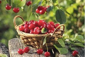 «Пам'ятаю, вишні доспівали, наливались соком у саду…». Наші рецепти