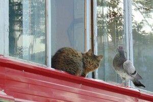 У Ковелі спалахнув гучний конфлікт між голубівником та котолюбами