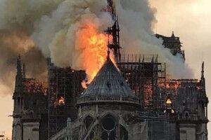 Бджоли собору Нотр-Дам вижили після пожежі