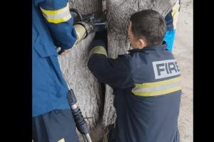 У Харкові бійцям ДСНС довелося рятувати семирічну дівчинку, яка застрягла між двома деревами (відео)