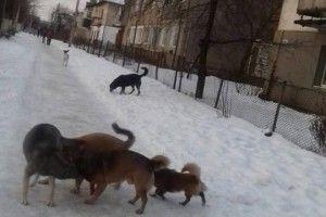 У Ківерцях бродячі собаки напали на дитину