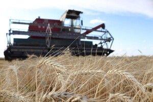 У Турійську закликають цілодобово охороняти хлібні поля