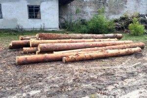 На Рівненщині правоохоронці виявили 30 кубів незаконної деревини
