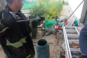 Рятувальники спіймали на приватному подвір'ї метрову змію