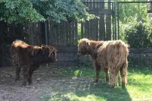 Луцький зоопарк став ще кудлатішим (фото)