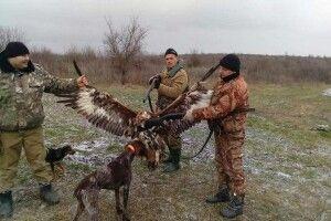 «Орли Авакова» застрелили червонокнижного беркута і взялися вихвалятися «трофеєм»