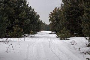 Учасники зимової краєзнавчої мандрівки Цуманською пущею вистежили дикого кабана та знайшли «відьмине масло»