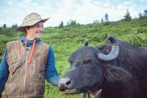 Карпатські буйволи «повернулися» вДолину нарцисів через 100років завдяки… німцю