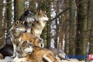 Сьогодні, 3 березня, людство відзначає Всесвітній день дикої природи