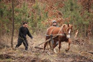 У Берестянському, Горинському та Холоневицькому лісництвах Цуманської пущі посіяли дві тонни жолудів (фото)