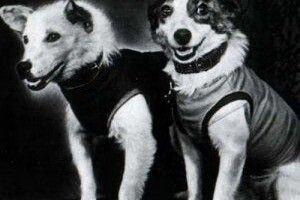 Славнозвісні собаки Білка і Стрілка насправді мали іноземні клички