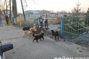 У центрі волинського міста дітей покусали безпритульні собаки