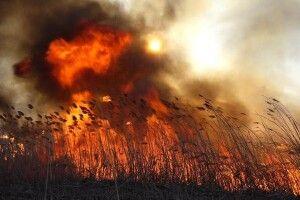 Безсніжна і суха зима: на Волині горить трава та очерет