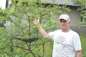 Сім дерев маневицького садівника