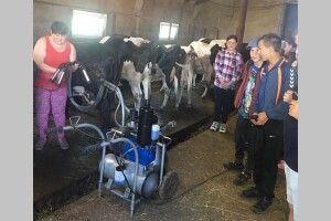 На Волині учні доїли корів (Фото)