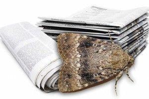 Міль боїться… запаху газет