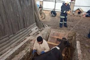На Рівненщині Чорнорябка потрапила в халепу, довелося викликати рятувальників