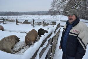 Де найкрутіші свині наВолині? Звісно, вОхотниках!