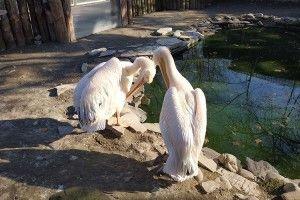 Луцький зоопарк перехопив урівненського відвідувачів