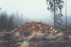 Волинянин нарубав дерев на 100 тисяч гривень: його затримали