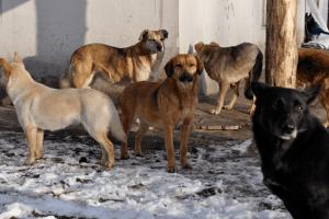 «Ласка» ловитиме бродячих собак уКіверцях
