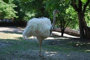 У Рівненському зоопарку з'явилася дзьобата біла красуня (фото)