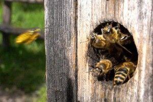 Погода на завтра: дощитиме, а бджолина матка понесе ключики від літа в далекі краї