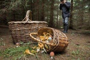 Сьогодні зранку волинські грибники натрапили у лісі на скелетований труп людини