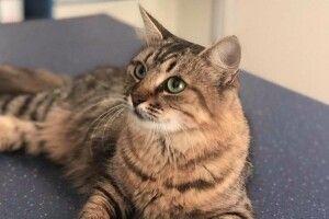 Зі скаженою кішкою з Рівного, яку оперували в Луцьку, контактувало як мінімум 9 осіб