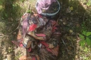 Житель Рівненщини у Чорнобильській зоні назбирав 8 кілограмів чорниць