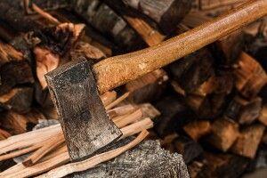 Волиняни незаконно вирубали дерев на 2 мільйони гривень: відкрито 149 кримінальних проваджень