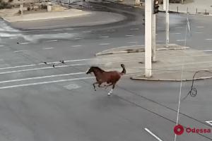 Ранковою Одесою ганяв кінь, який дременув з іподрому (відео)