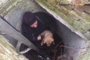 Бійці ДСНС врятували цуценя, яке впало в каналізаційний колодязь (фото)