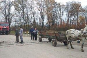 На Волині поліцейські встигнули врятувати коня на залізничній колії