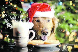 Хай Новий рік убудь-якій оселі щасливим буде, щедрим івеселим!