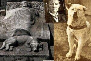 Собака 9років чекав назалізничній станції свого господаря, який помер